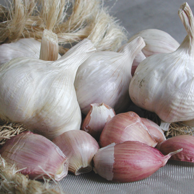 Italian Late garlic