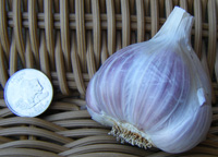 creole red garlic